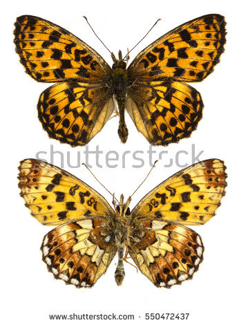 Upperside Stock Images, Royalty.