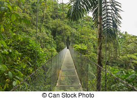 Stock Photo of Monteverde Cloud Forest.