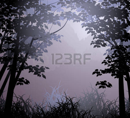 13,617 Cloud Forest Stock Vector Illustration And Royalty Free.