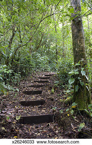Stock Photo of Steps ascending on path. Tropical Cloud Forest.