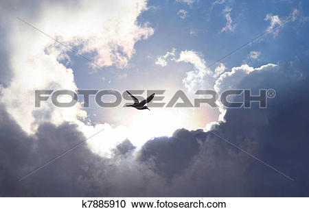 Stock Photography of Bird flying in the sky with a dramatic cloud.
