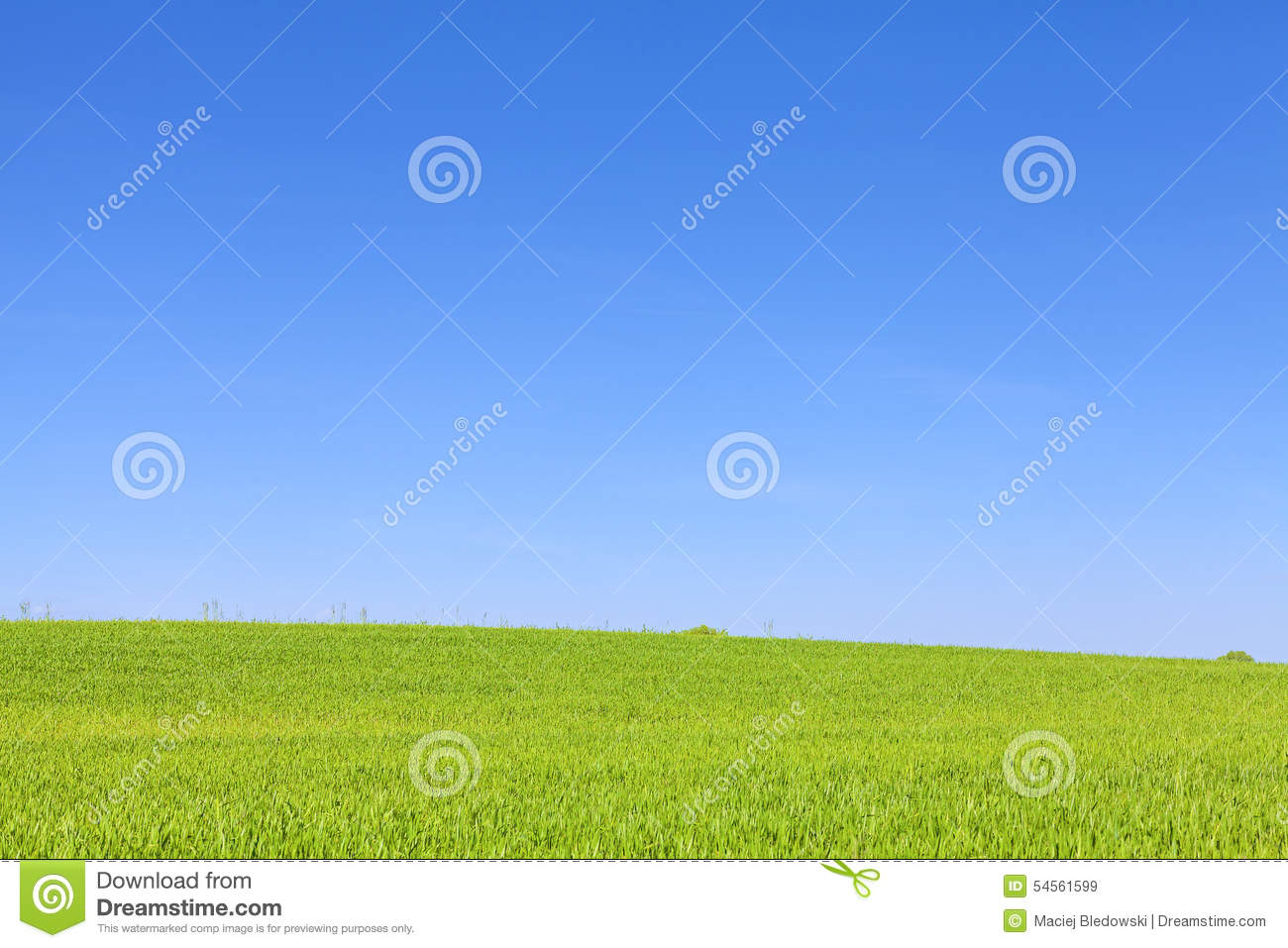 Green Field And Cloudless Blue Sky. Stock Photo.