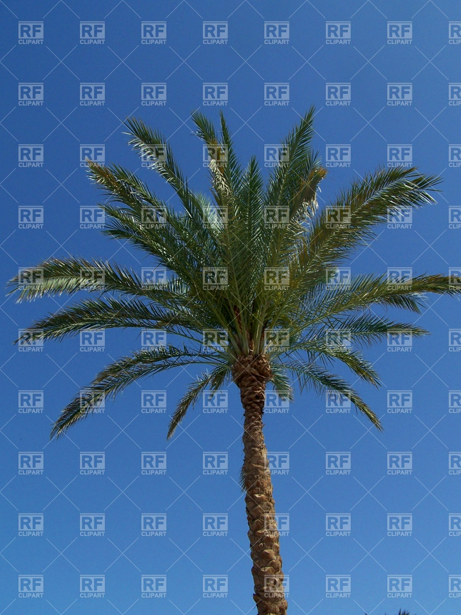 Palm tree and cloudless sky Vector Image #495.
