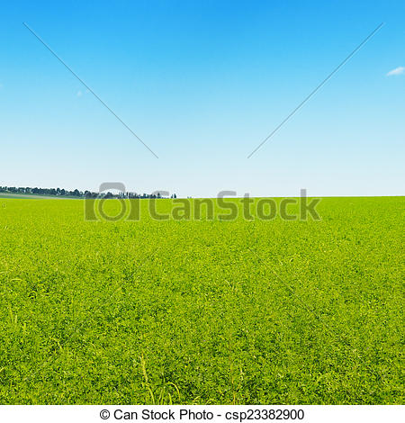 Stock Photography of green field and blue cloudless sky.
