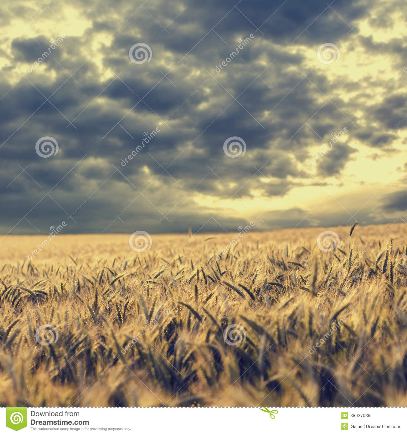 Storm Clouds Gathering Over A Wheat Field Stock Photo.