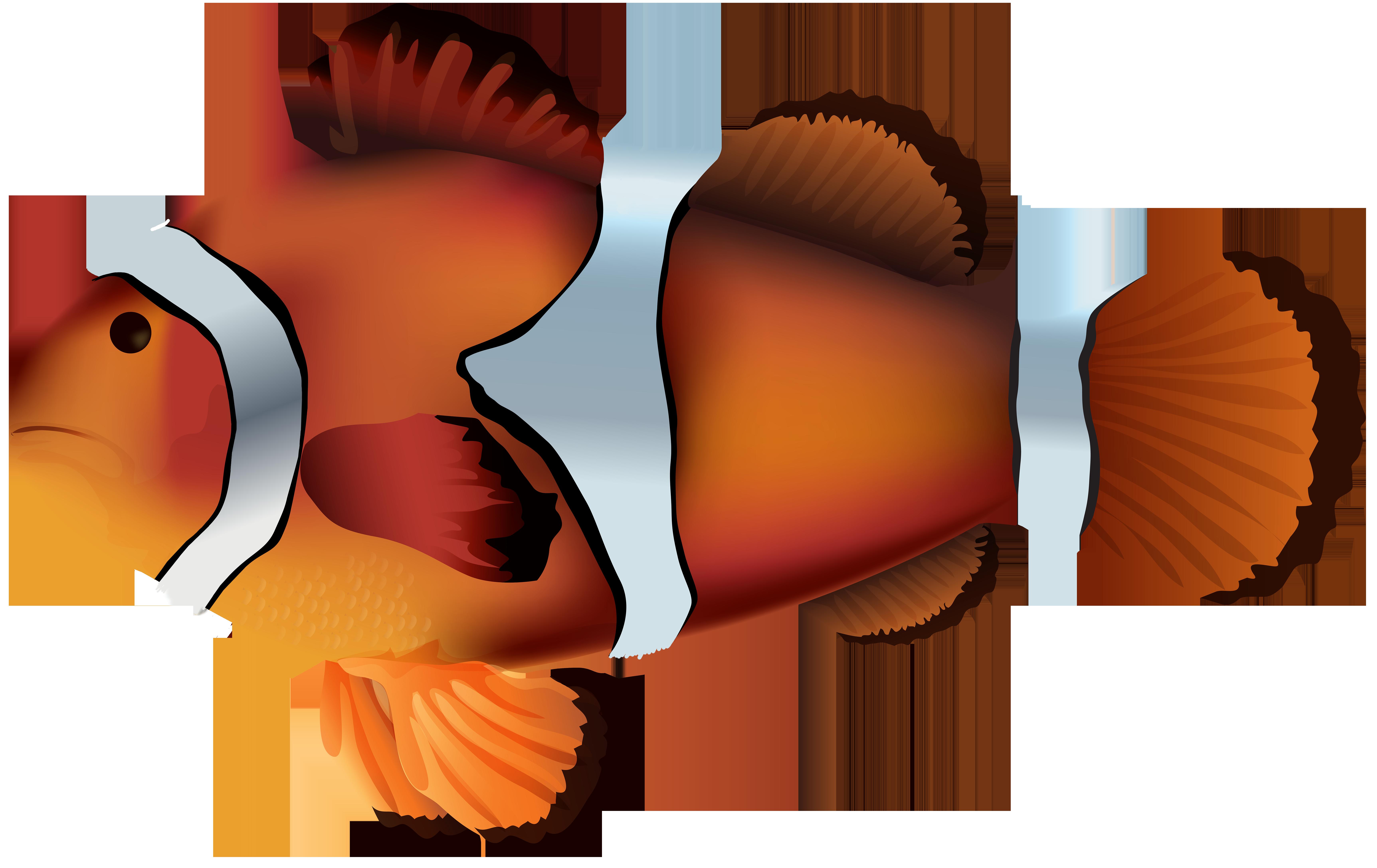 Clownfish PNG Transparent Clip Art Image.