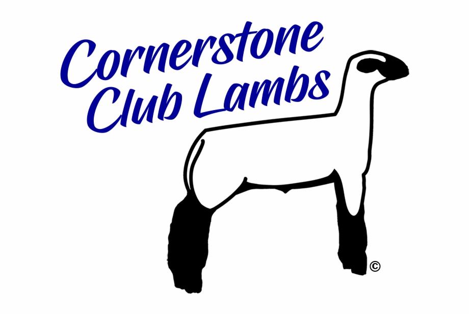 Show Lambs Amp Sheep For Sale Cornerstone Club Lambs.