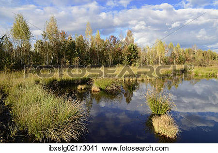 "Stock Photography of ""Marshland pond overgrown with club."