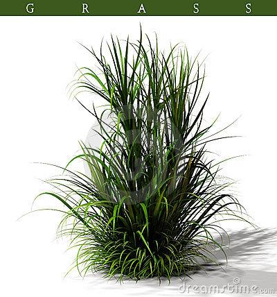 Grass clump clipart.
