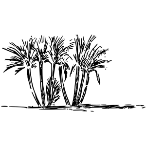 Tree clump clipart, cliparts of Tree clump free download (wmf, eps.