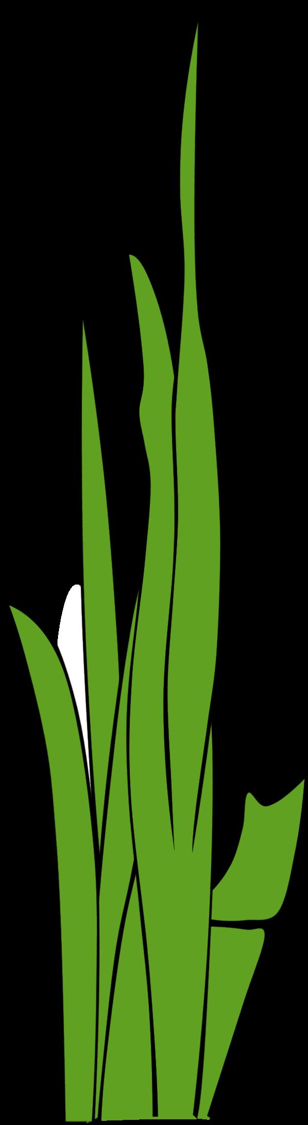 Blade Of Grass Vector.