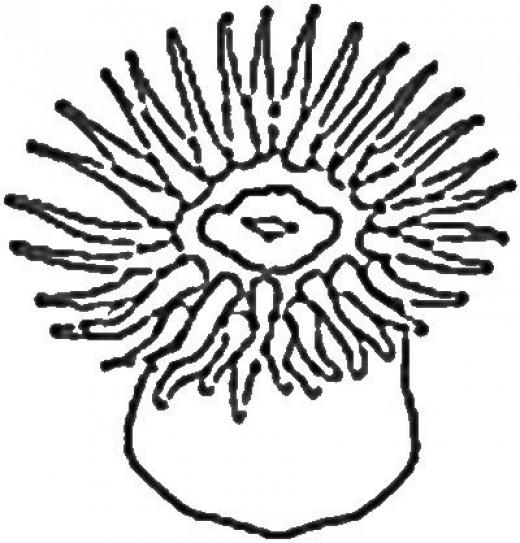Sea Anemone Clipart.