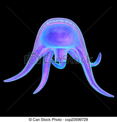 Clip Art of Medusa Form is a form of cnidarian in which the body.