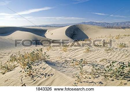 Stock Images of Sand dunes in the Coachella Valley Preserve.