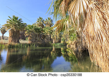 Pictures of The palm trees at Coachella Valley Preserve.
