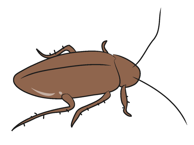 Free Cockroaches Cliparts, Download Free Clip Art, Free Clip.
