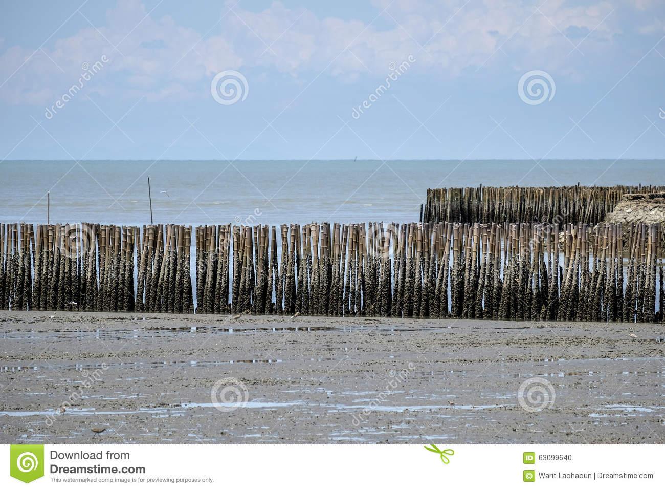 Bamboo Stick Coastal Protection Stock Photo.