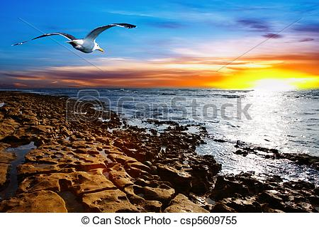 Stock Images of Coastal view with flying seagull csp5609755.