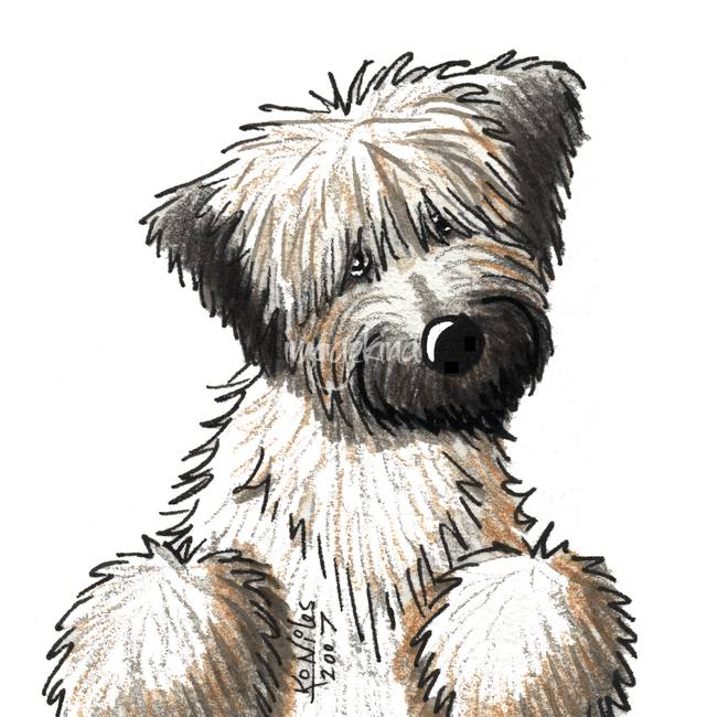 Soft coated wheaten terrier clipart.