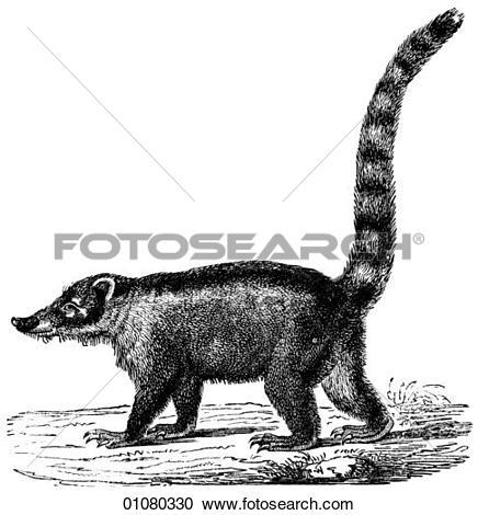 Stock Illustrations of Flora & Fauna.