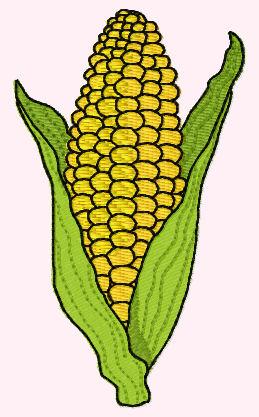 Corn cob clipart.