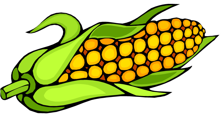 Corn Cob Pictures.