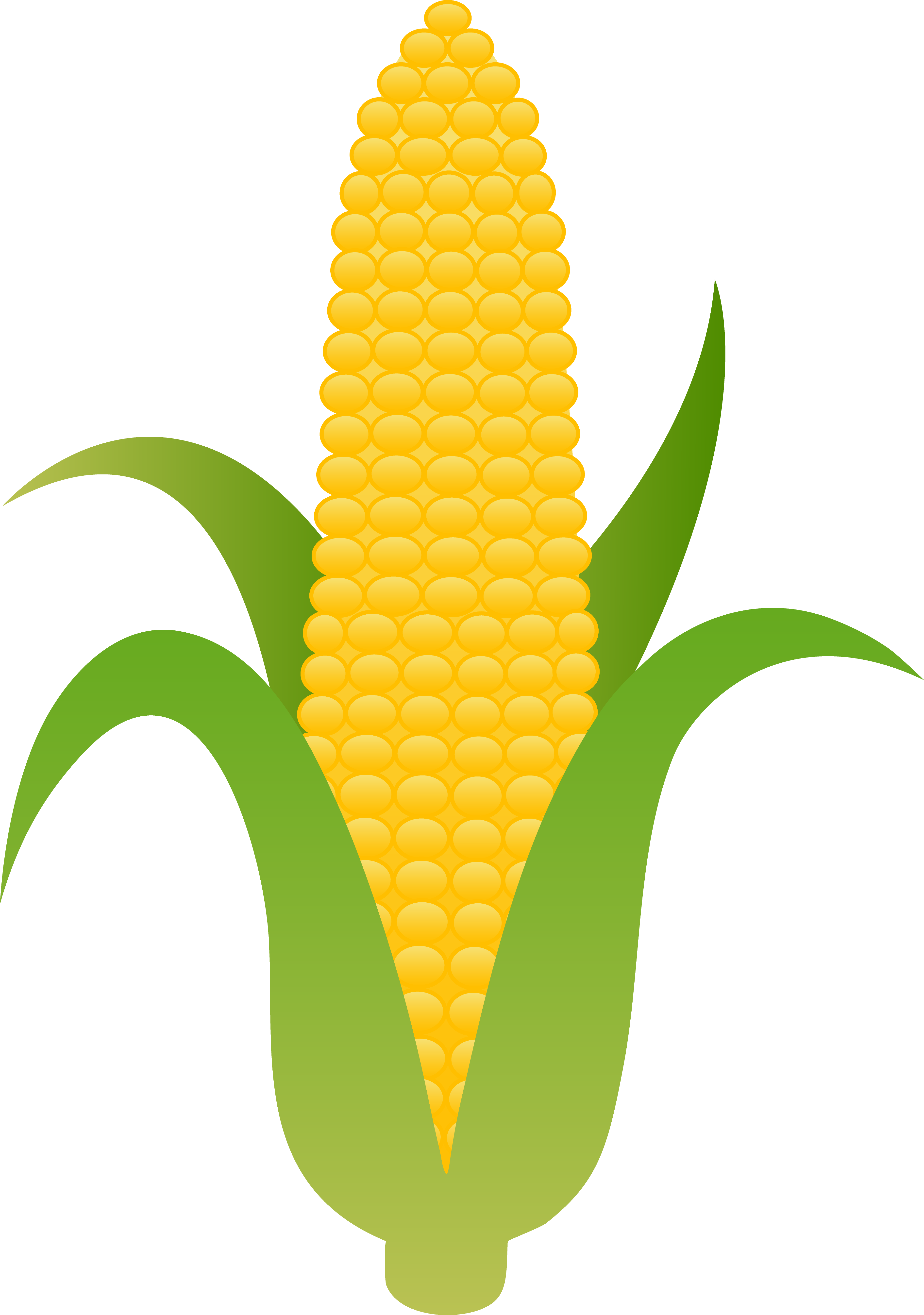 Maize cultivation clipart #2