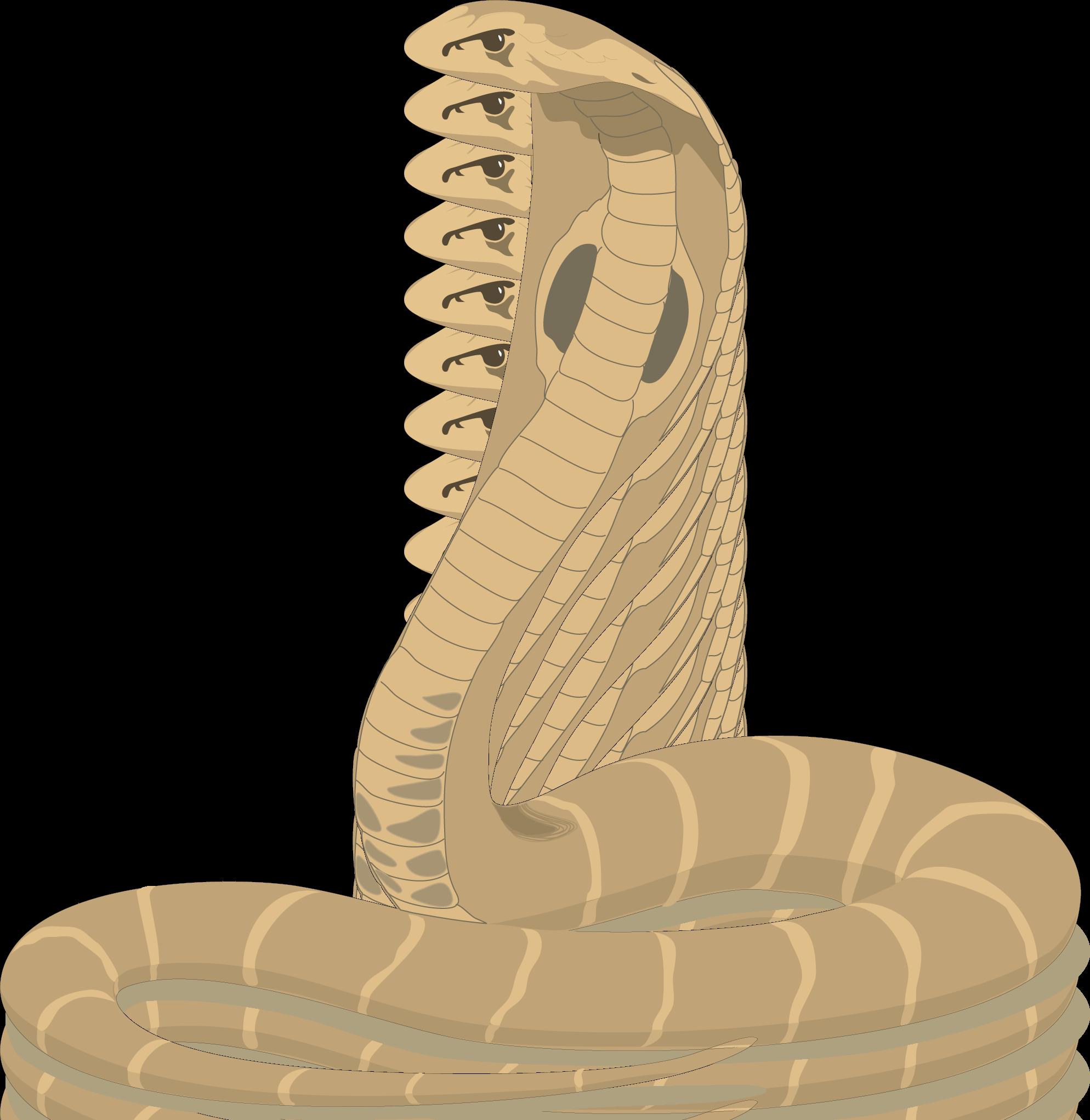 Free Cobra Cliparts, Download Free Clip Art, Free Clip Art.