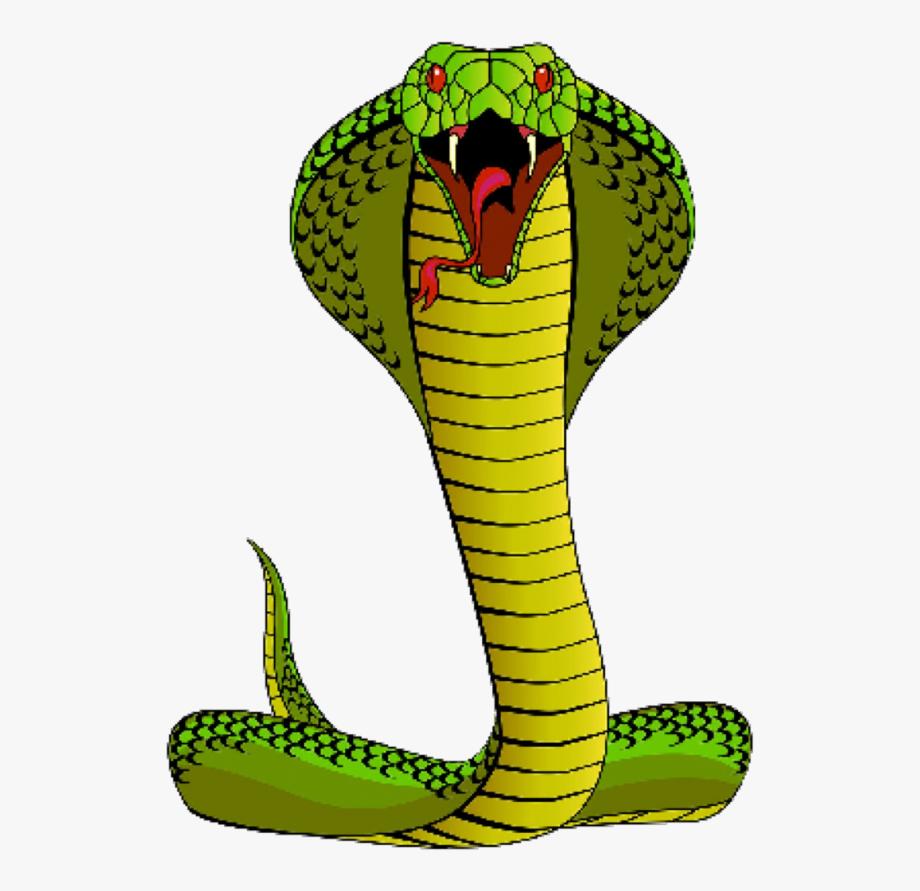 Cobra Clipart Spitting Cobra.