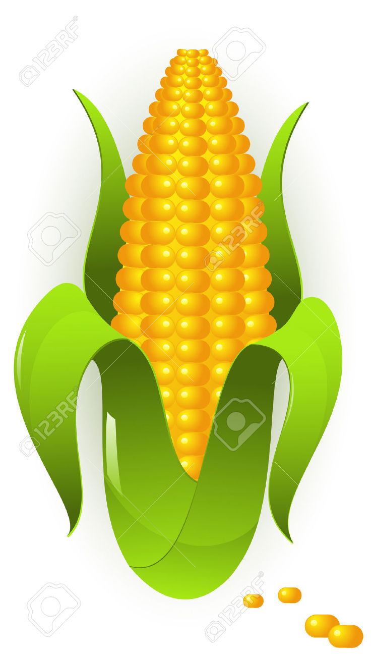 Cobs clipart - Clipground