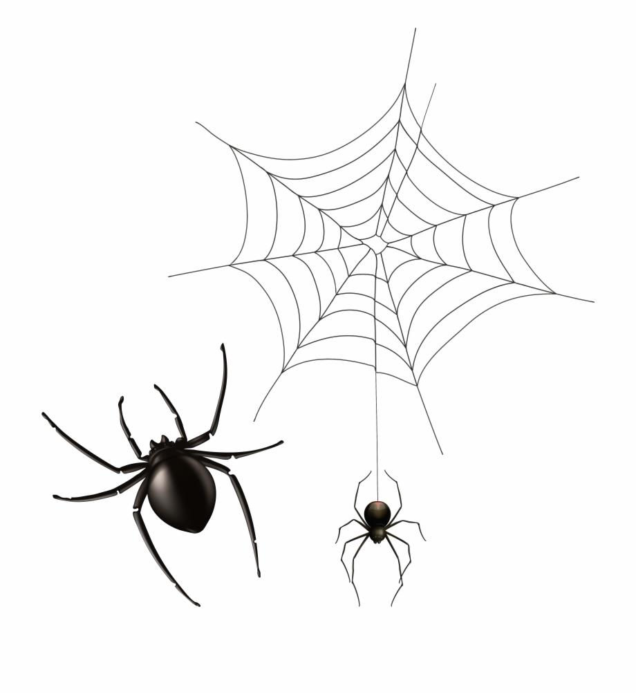 Spider And Cobweb Png.
