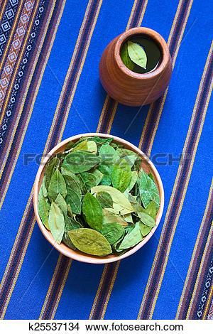 Stock Photo of Dried Coca Leaves and Fresh Coca Tea k25537134.