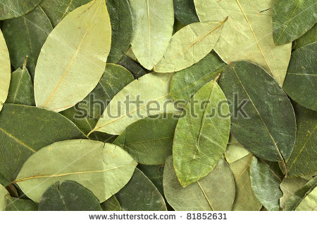 Coca Leaves Stock Photos, Royalty.