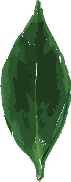 Tea Leaf Clip Art at Clker.com.