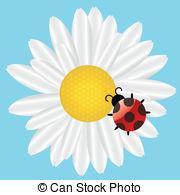 Coccinella septempunctata Illustrations and Clip Art. 6 Coccinella.