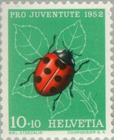 1000+ images about Coccinella septempunctata on Pinterest.