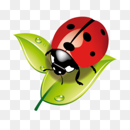 Coccinelle PNG and Coccinelle Transparent Clipart Free Download..