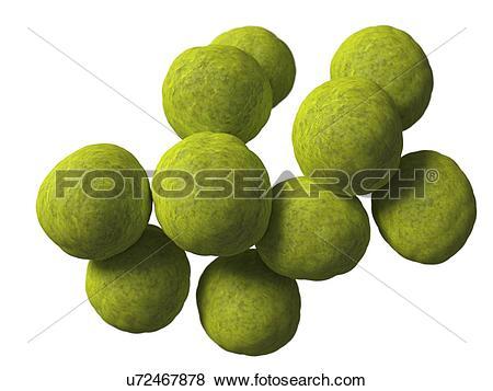 Stock Illustration of Coccus bacteria, artwork u72467878.
