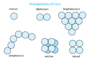 Bacterial Taxonomy 1.