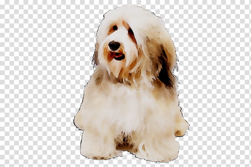 Cartoon Dog, Cockapoo, Havanese Dog, Tibetan Terrier.
