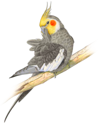 Parrots In Paradise Clipart.