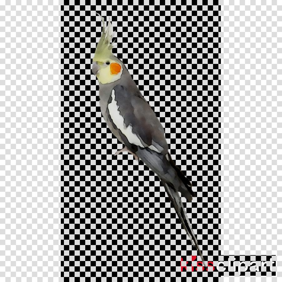 Bird Parrottransparent png image & clipart free download.