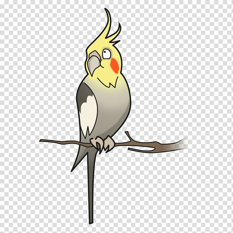 Cockatiel Bird Parakeet Cockatoo Pet, cockatoo transparent.