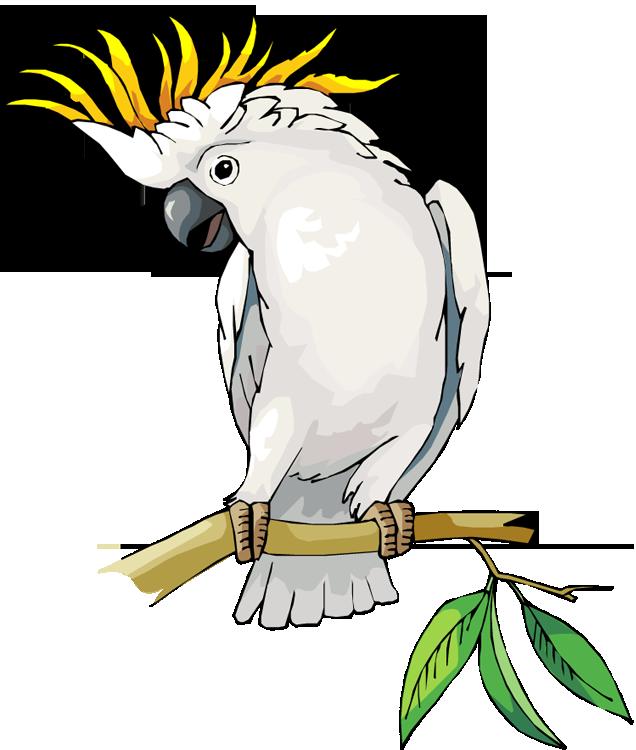 Cockatoo Clipart.