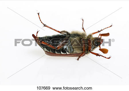 Stock Photograph of insect, common.