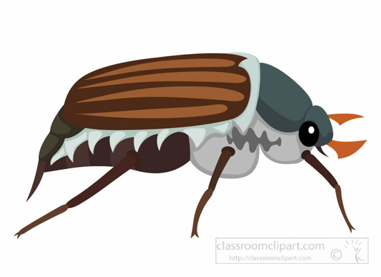 Insect Clipart : cockchafer.