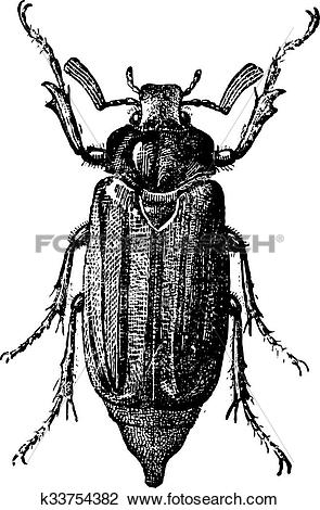 Clipart of Fig 10. Cockchafer or May bug, vintage engraving.