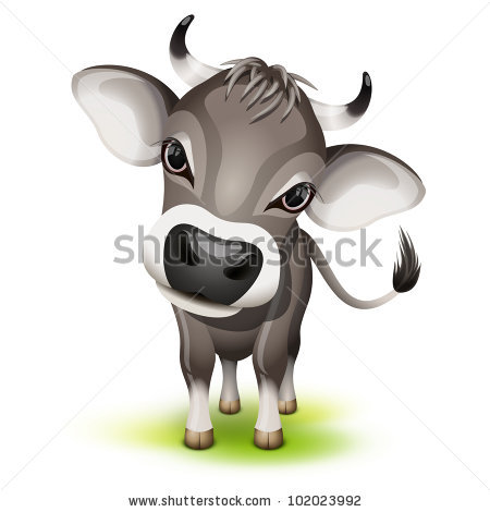 Swiss Cow with a Cocked Head.
