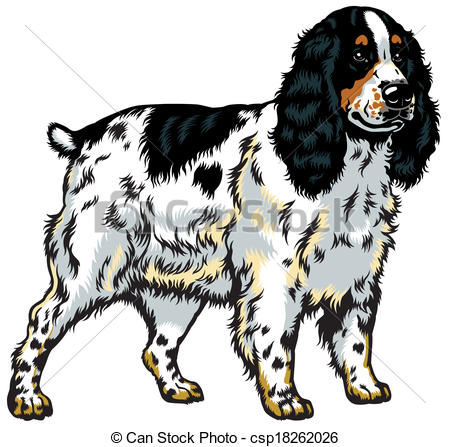 Cocker spaniel Illustrations and Clip Art. 257 Cocker spaniel.