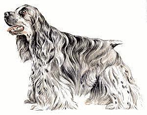 Free Cocker Spaniels Clipart.